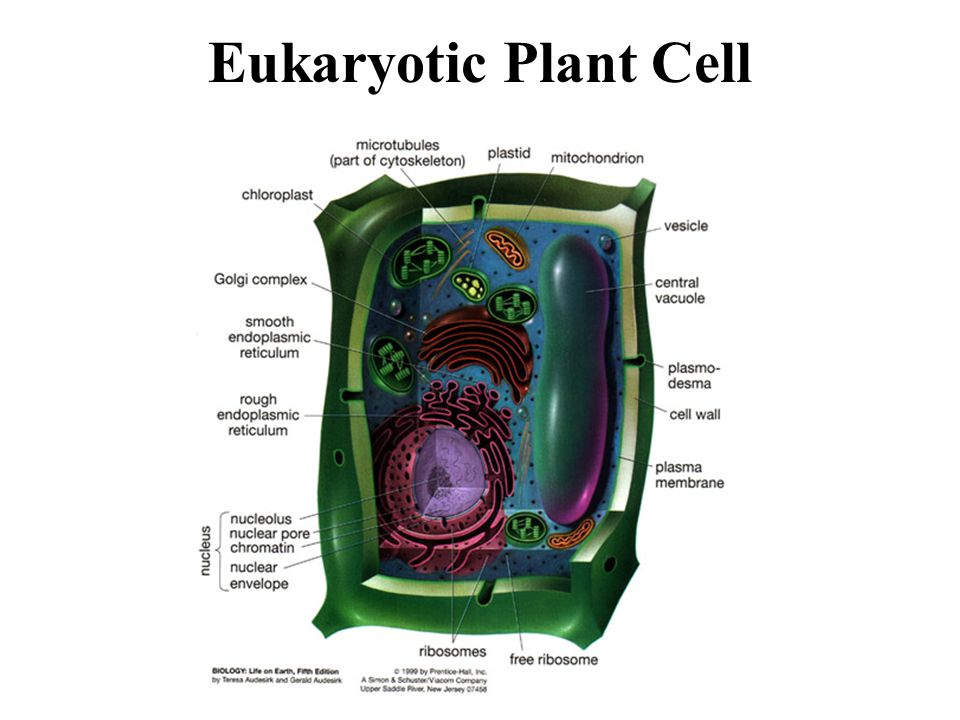 Chromatin in a plant cell