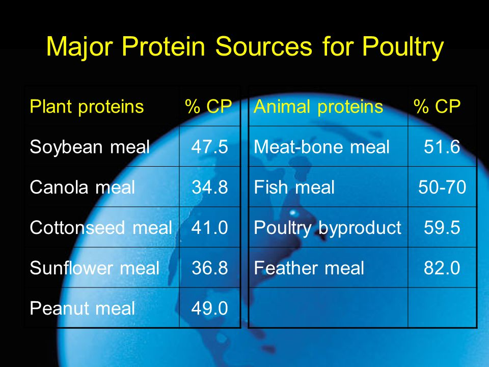 Major Protein Sources for Poultry