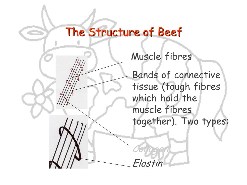 The Structure of Beef Muscle fibres