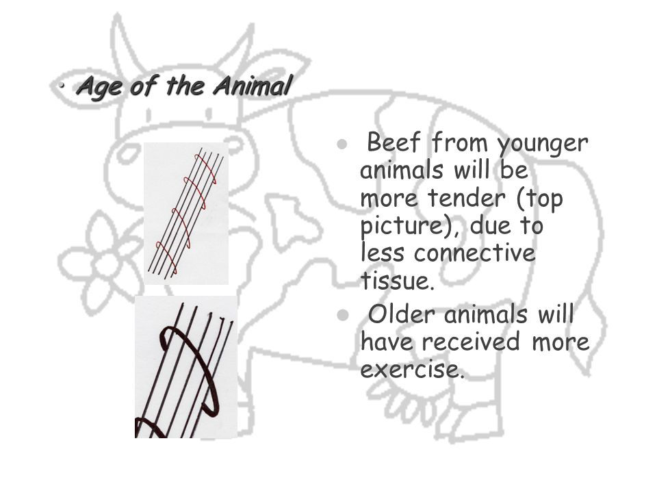 Older animals will have received more exercise.