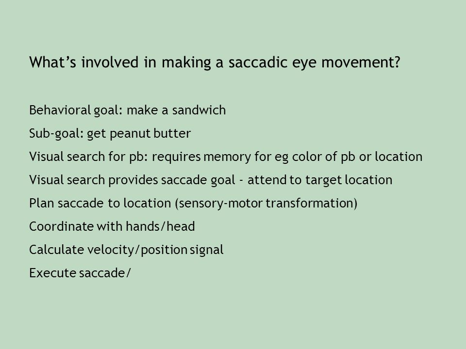 What's involved in making a saccadic eye movement