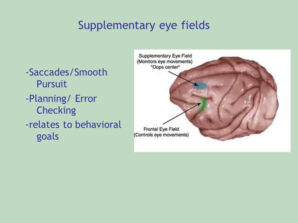 Supplementary eye fields
