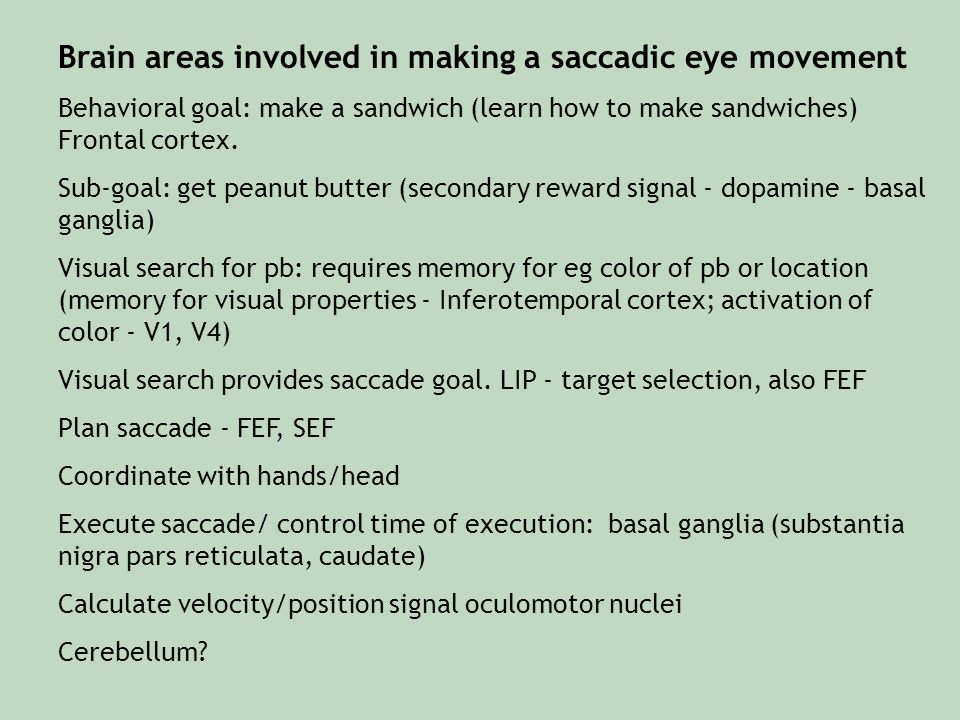 Brain areas involved in making a saccadic eye movement