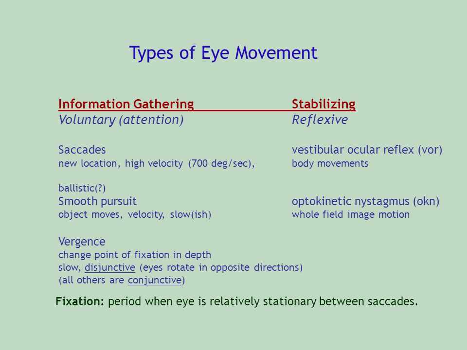 Types of Eye Movement Information Gathering Stabilizing