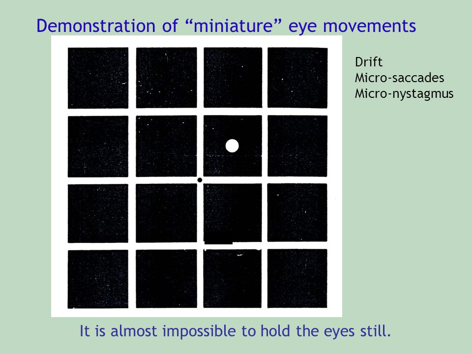 Demonstration of miniature eye movements