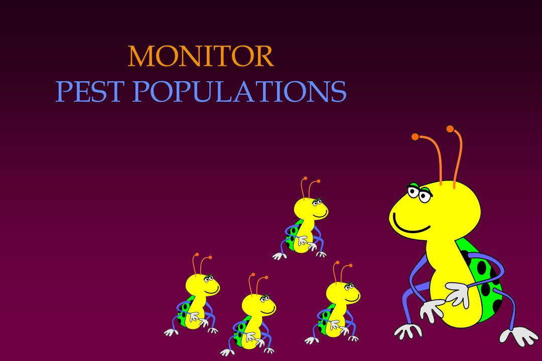 MONITOR PEST POPULATIONS