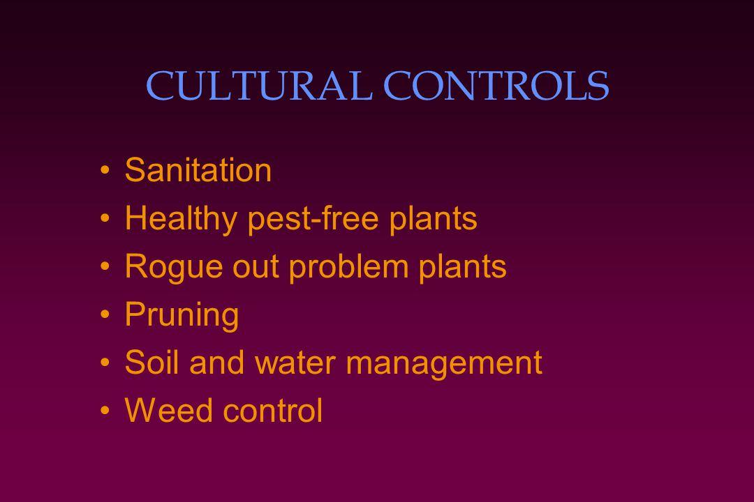 CULTURAL CONTROLS Sanitation Healthy pest-free plants