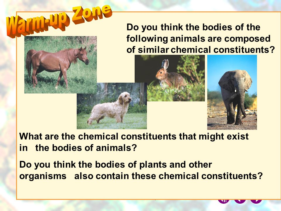 Warm-up Zone Do you think the bodies of the following animals are composed of similar chemical constituents