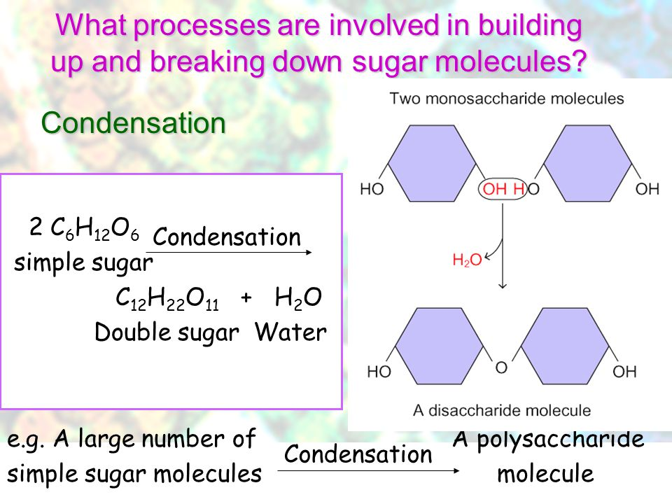 What processes are involved in building up and breaking down sugar molecules