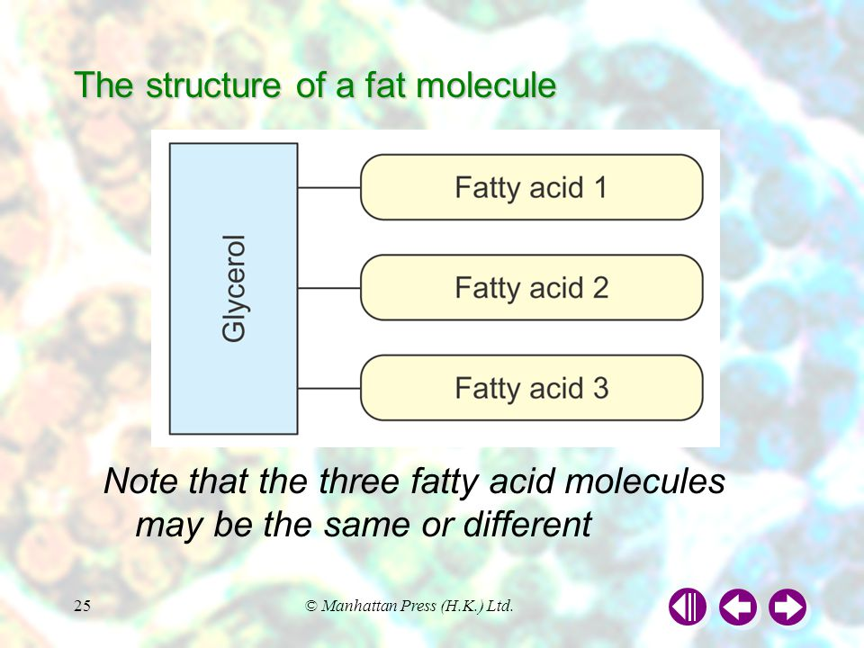 The structure of a fat molecule