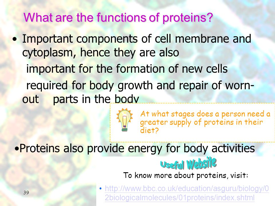 What are the functions of proteins