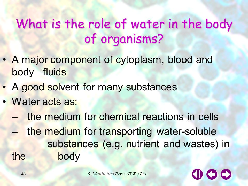 What is the role of water in the body of organisms