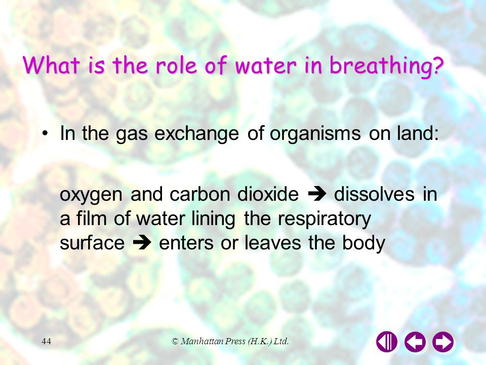 What is the role of water in breathing