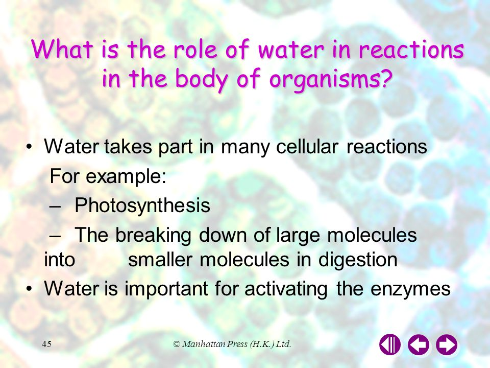 What is the role of water in reactions in the body of organisms