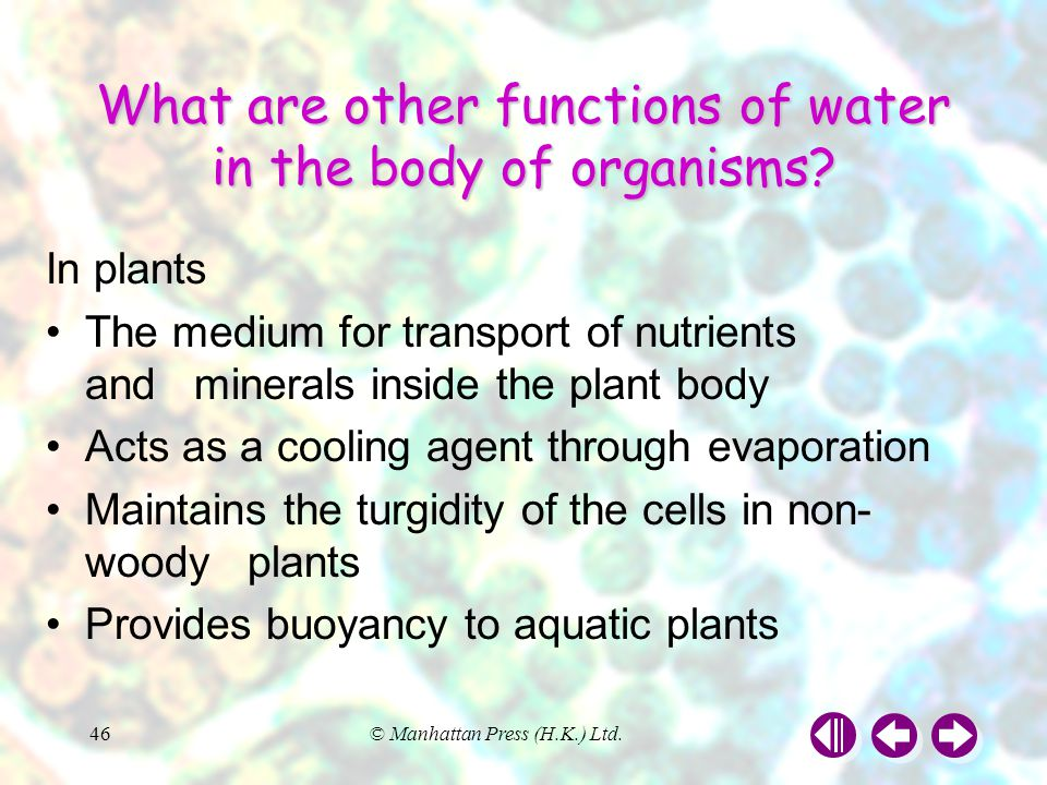 What are other functions of water in the body of organisms