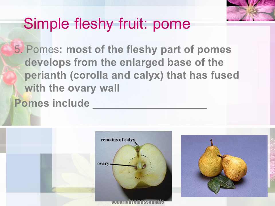 Simple fleshy fruit: pome