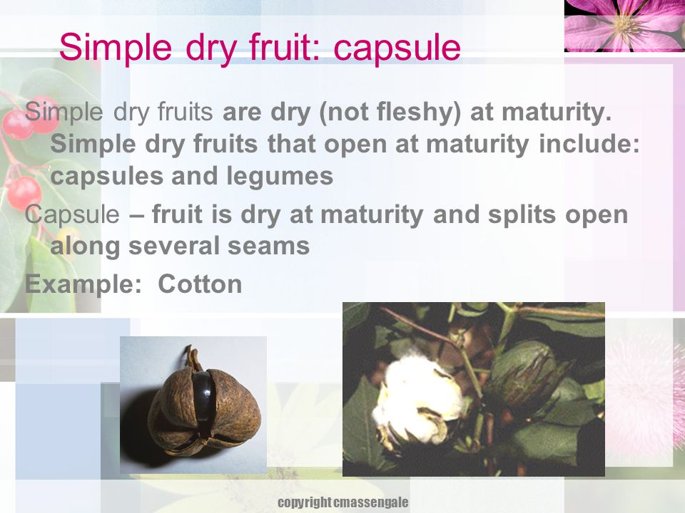 Simple dry fruit: capsule