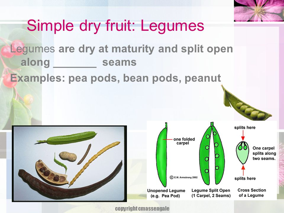 Simple dry fruit: Legumes