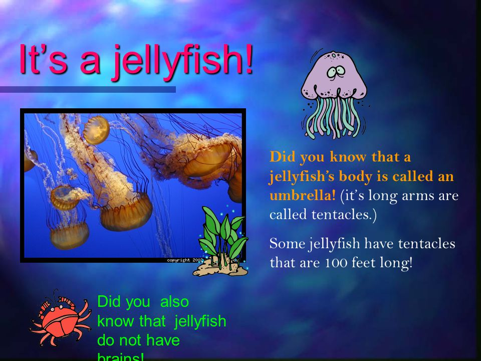 It's a jellyfish! Did you know that a jellyfish's body is called an umbrella! (it's long arms are called tentacles.)