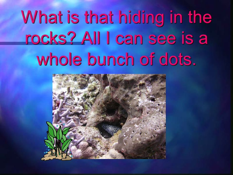 What is that hiding in the rocks