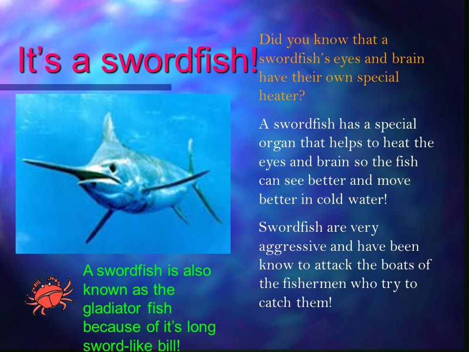 It's a swordfish! Did you know that a swordfish's eyes and brain have their own special heater