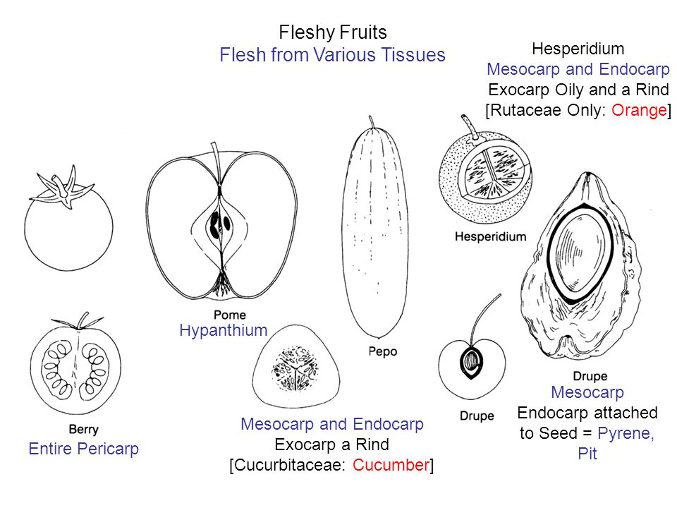 Flesh from Various Tissues