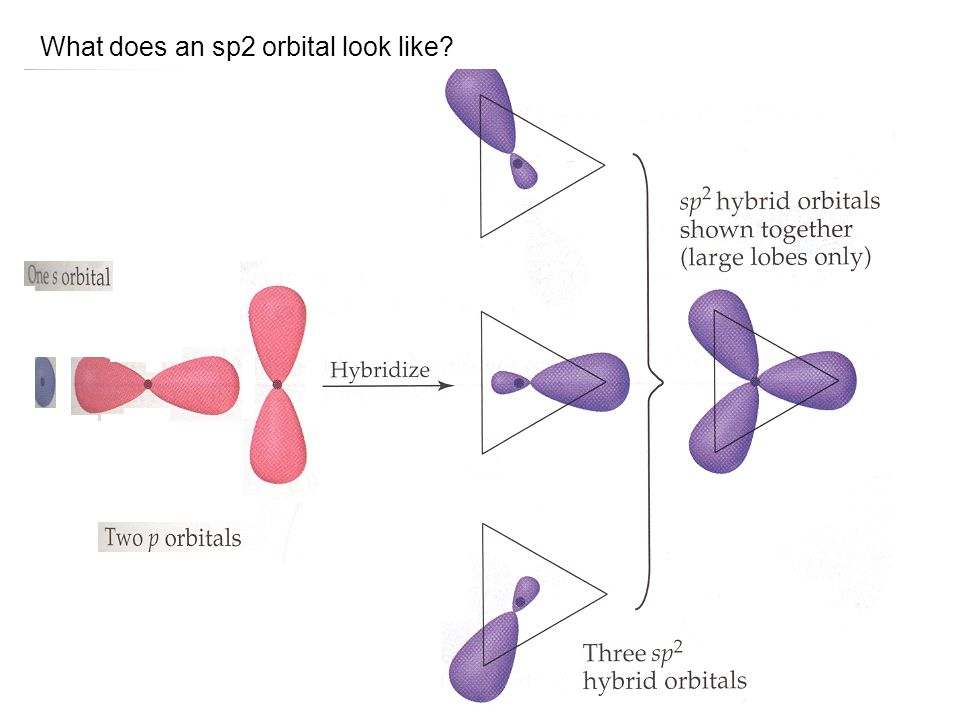 What does an sp2 orbital look like
