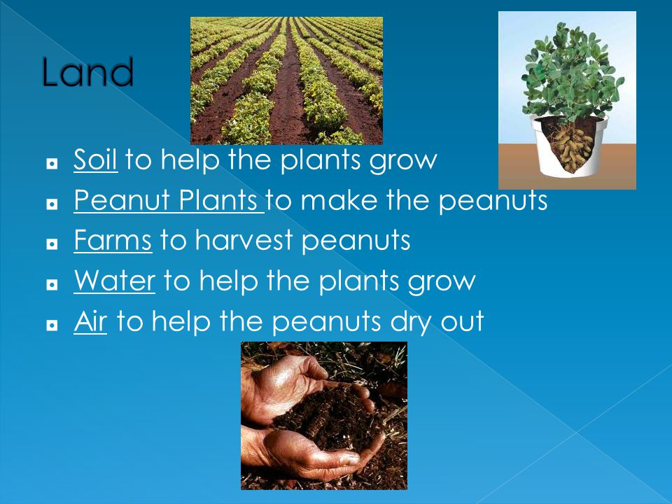 Land Soil to help the plants grow Peanut Plants to make the peanuts