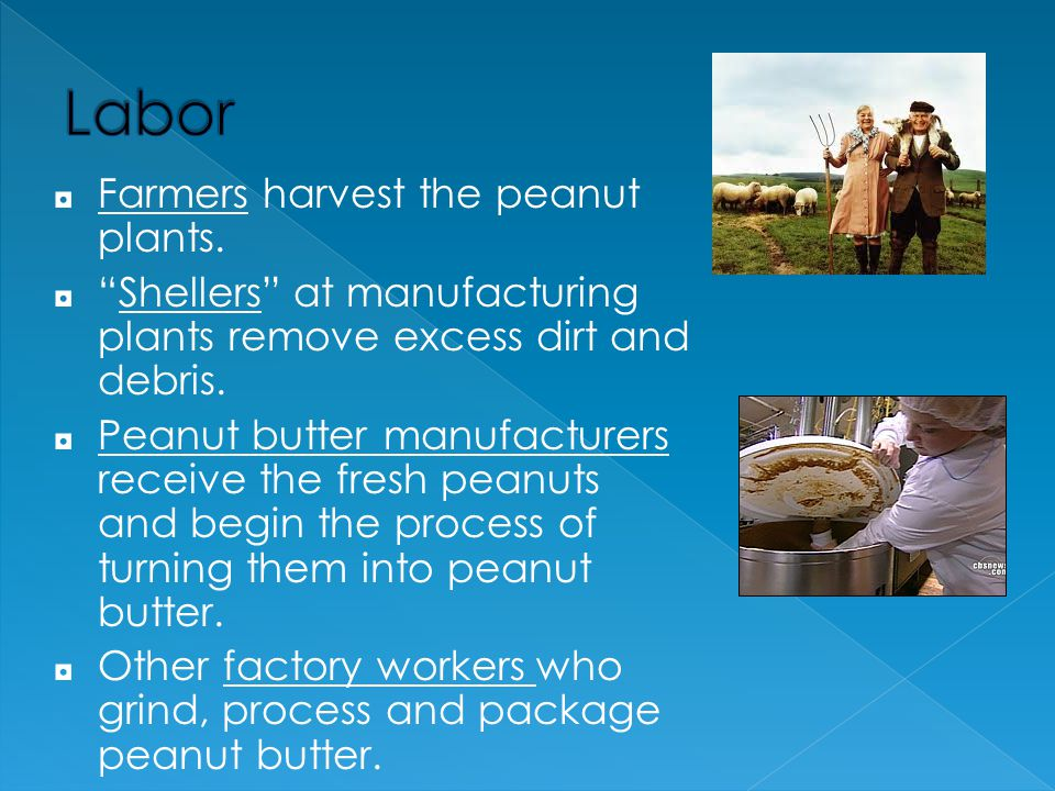 Labor Farmers harvest the peanut plants.
