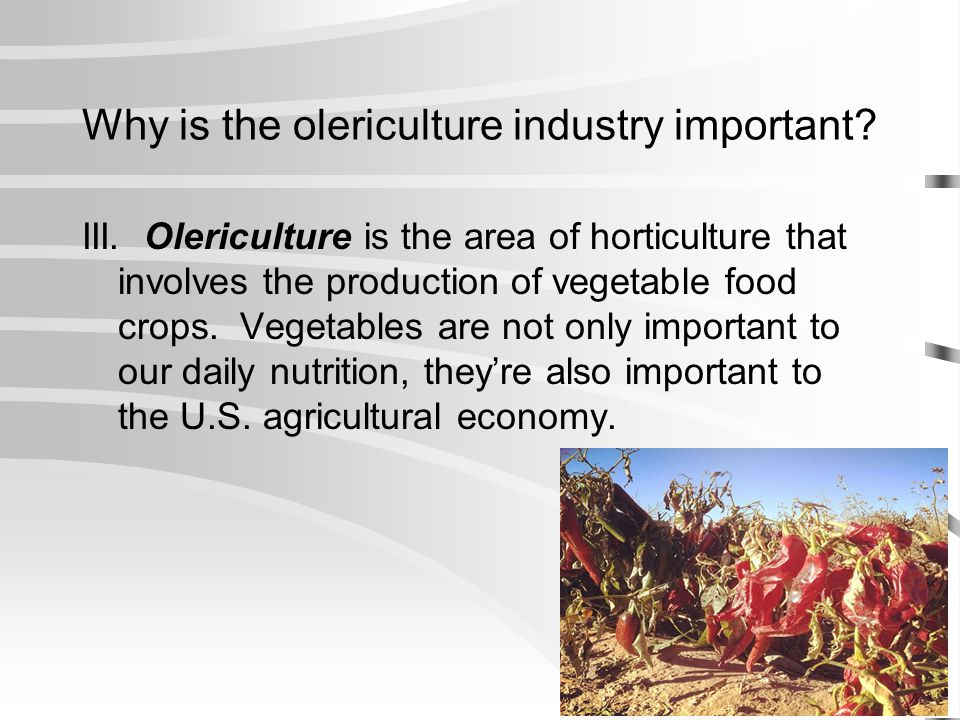 Why is the olericulture industry important
