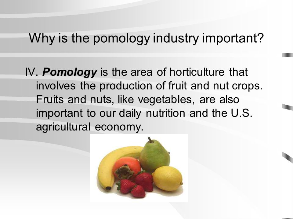 Why is the pomology industry important