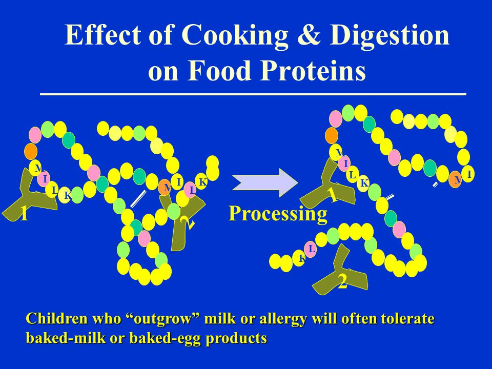 Effect of Cooking & Digestion on Food Proteins