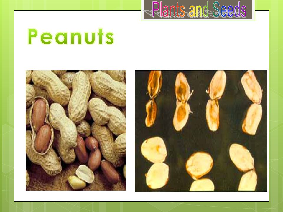 Plants and Seeds Peanuts