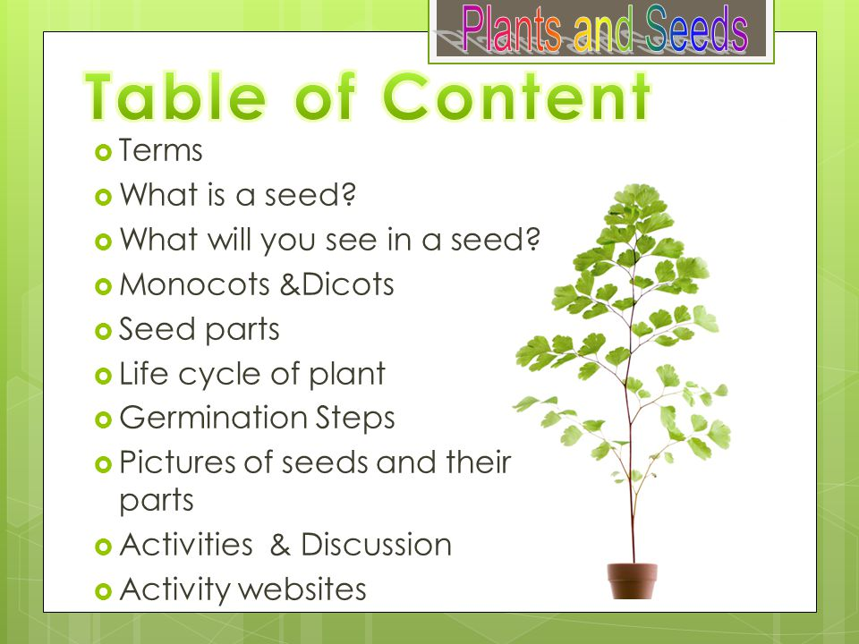Table of Content Plants and Seeds Terms What is a seed