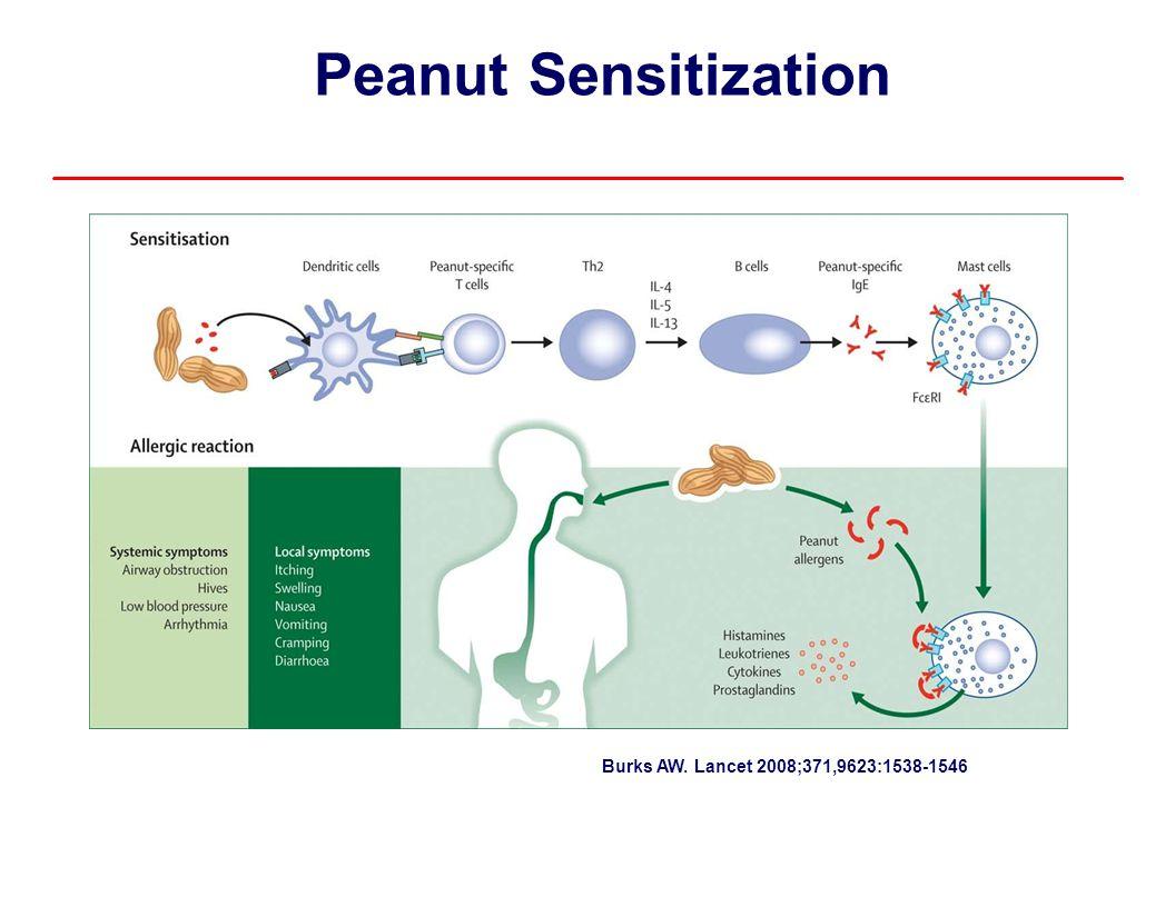 Peanut Sensitization Burks AW. Lancet 2008;371,9623:1538-1546