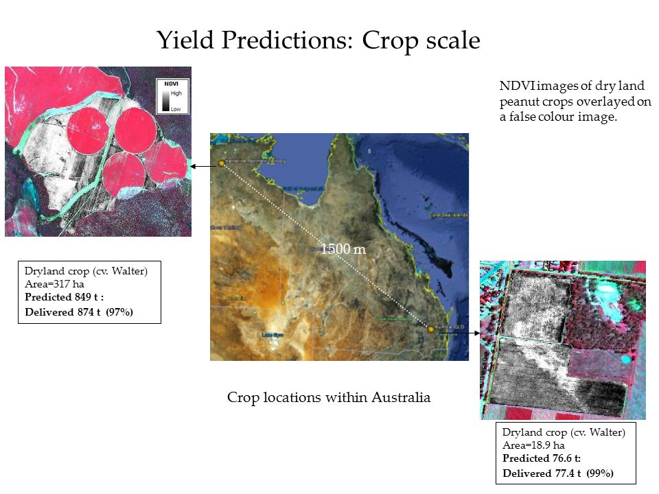 Yield Predictions: Crop scale