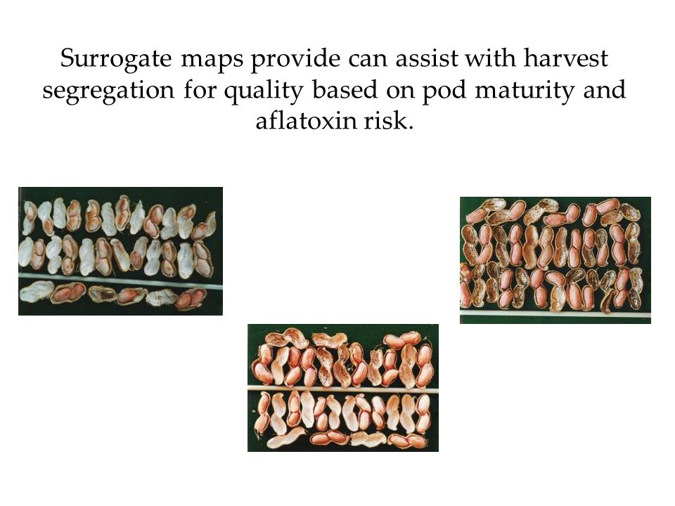 Surrogate maps provide can assist with harvest segregation for quality based on pod maturity and aflatoxin risk.