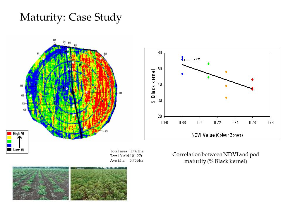 Correlation between NDVI and pod maturity (% Black kernel)