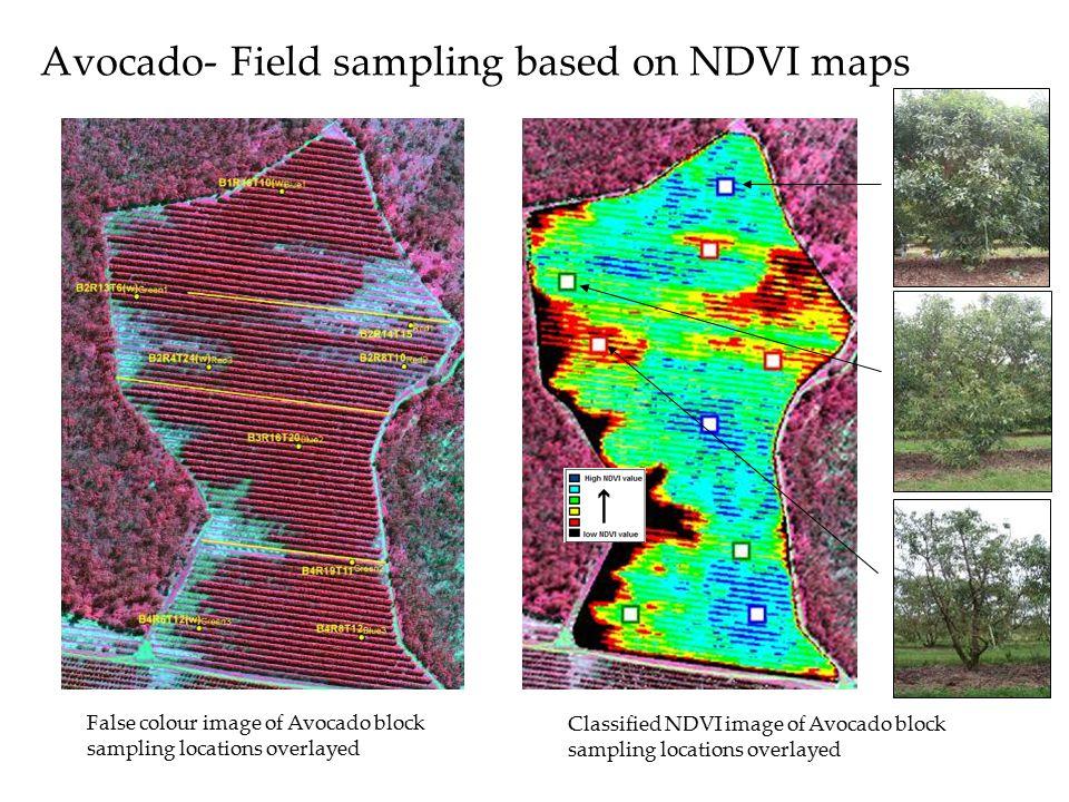 Avocado- Field sampling based on NDVI maps