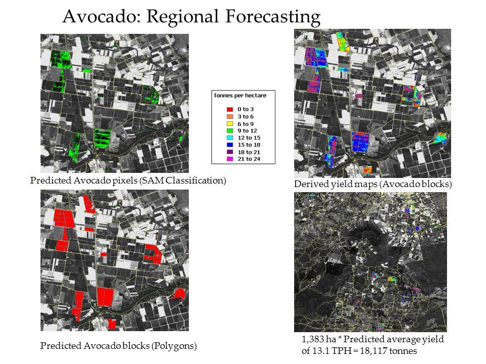 Avocado: Regional Forecasting