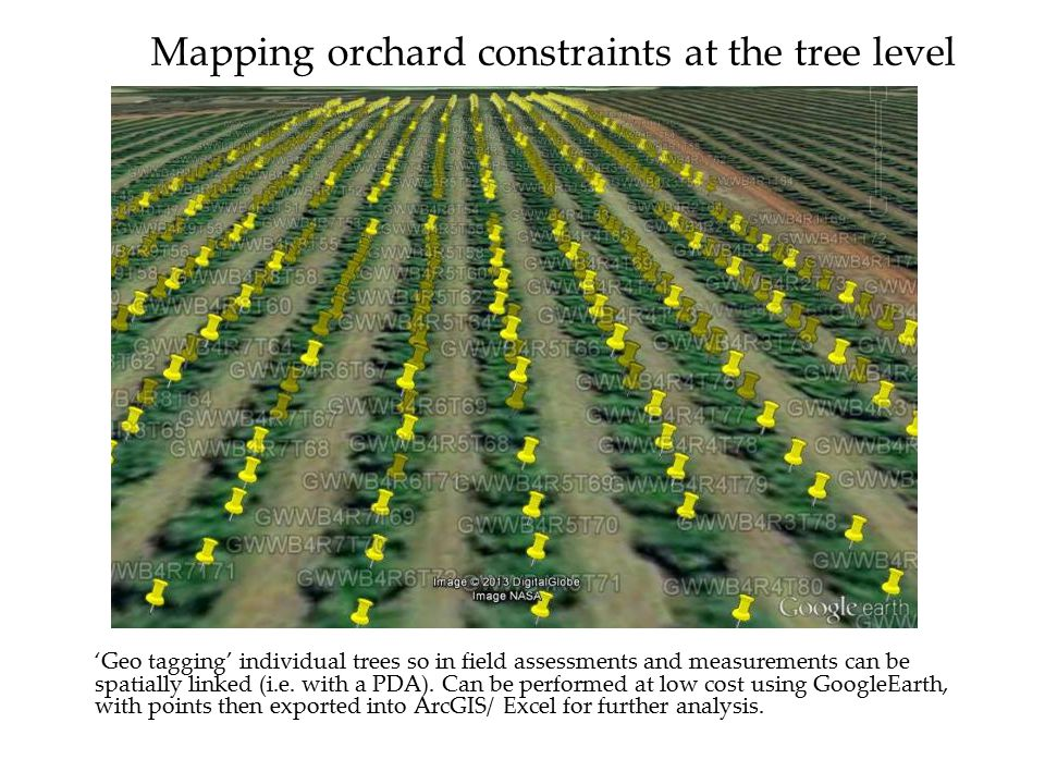 Mapping orchard constraints at the tree level