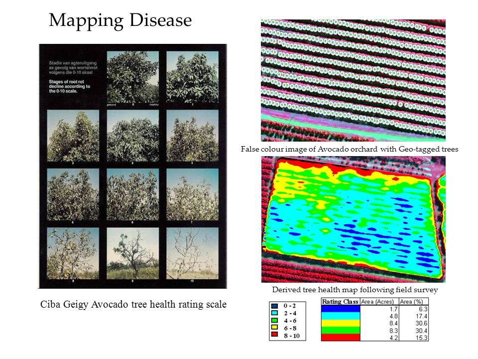 Mapping Disease Ciba Geigy Avocado tree health rating scale