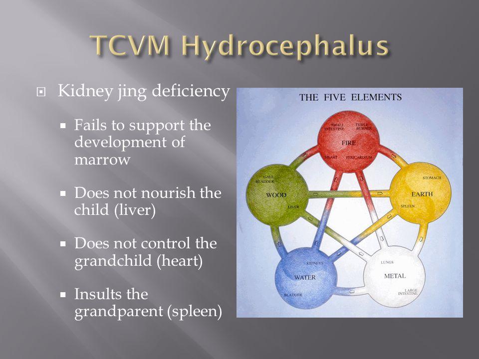 TCVM Hydrocephalus Kidney jing deficiency