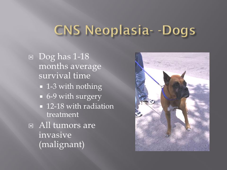CNS Neoplasia- -Dogs Dog has 1-18 months average survival time