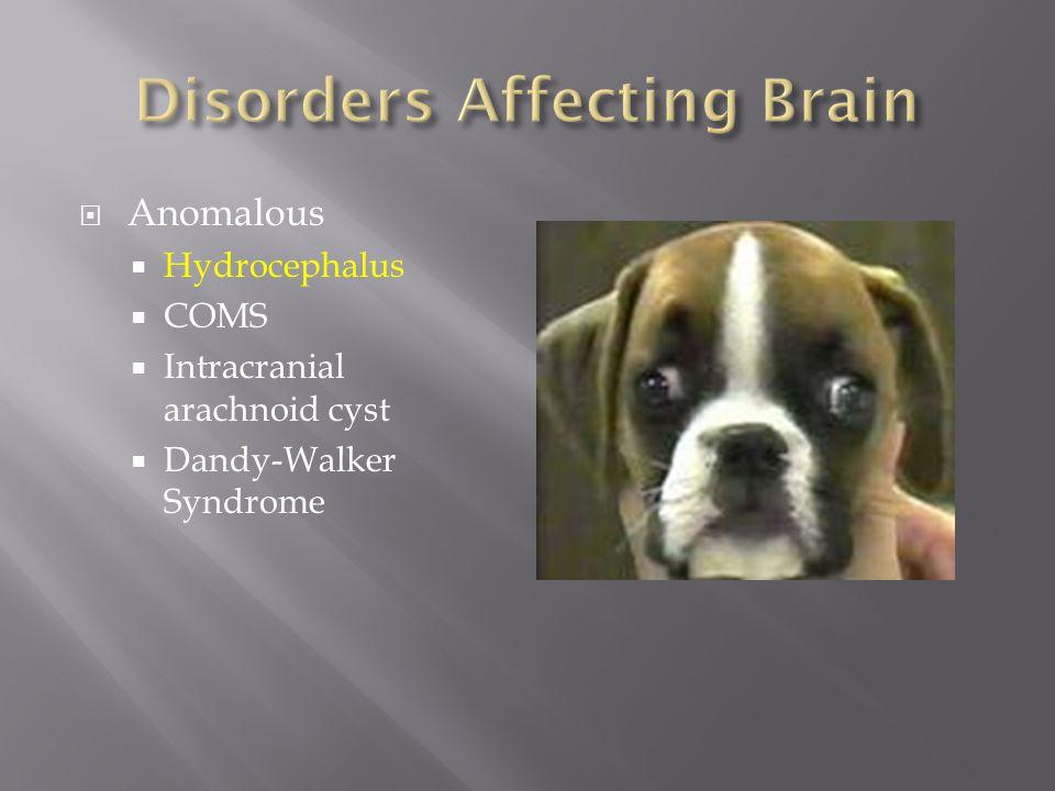 Disorders Affecting Brain
