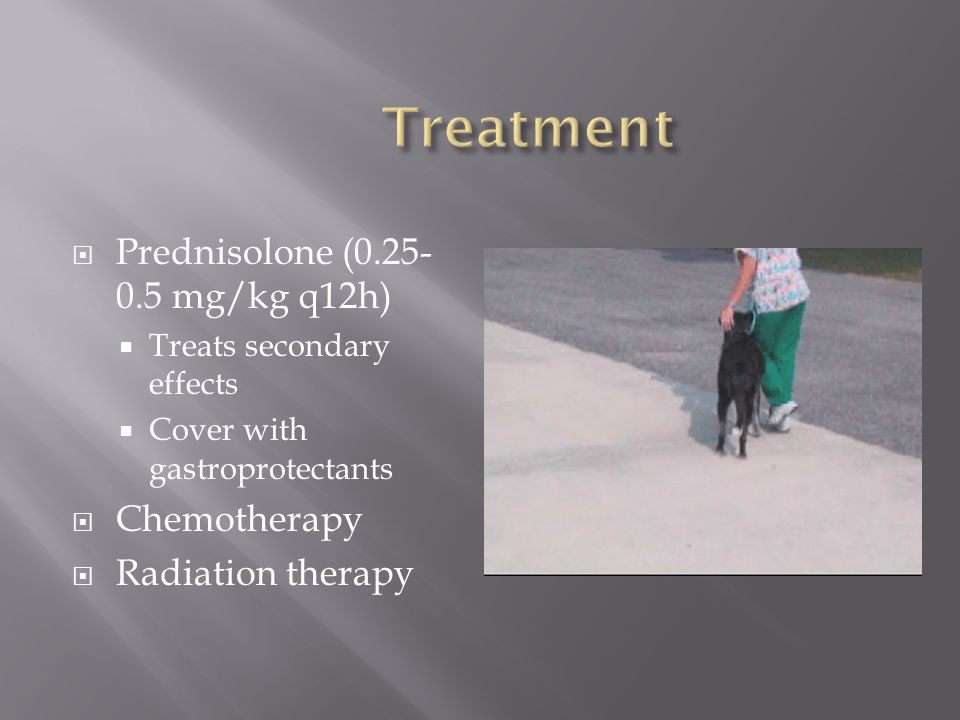 Treatment Prednisolone (0.25-0.5 mg/kg q12h) Chemotherapy
