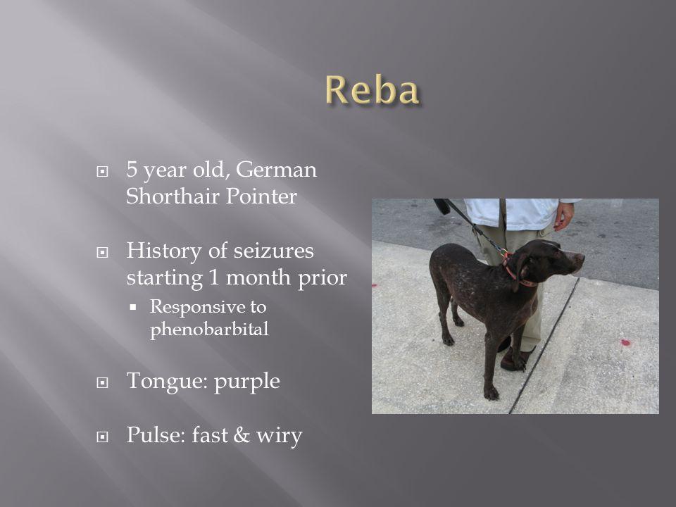 Reba 5 year old, German Shorthair Pointer