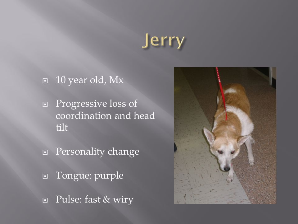 Jerry 10 year old, Mx Progressive loss of coordination and head tilt