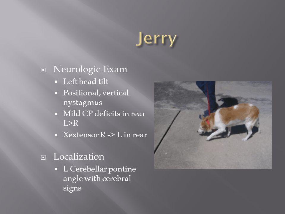 Jerry Neurologic Exam Localization Left head tilt