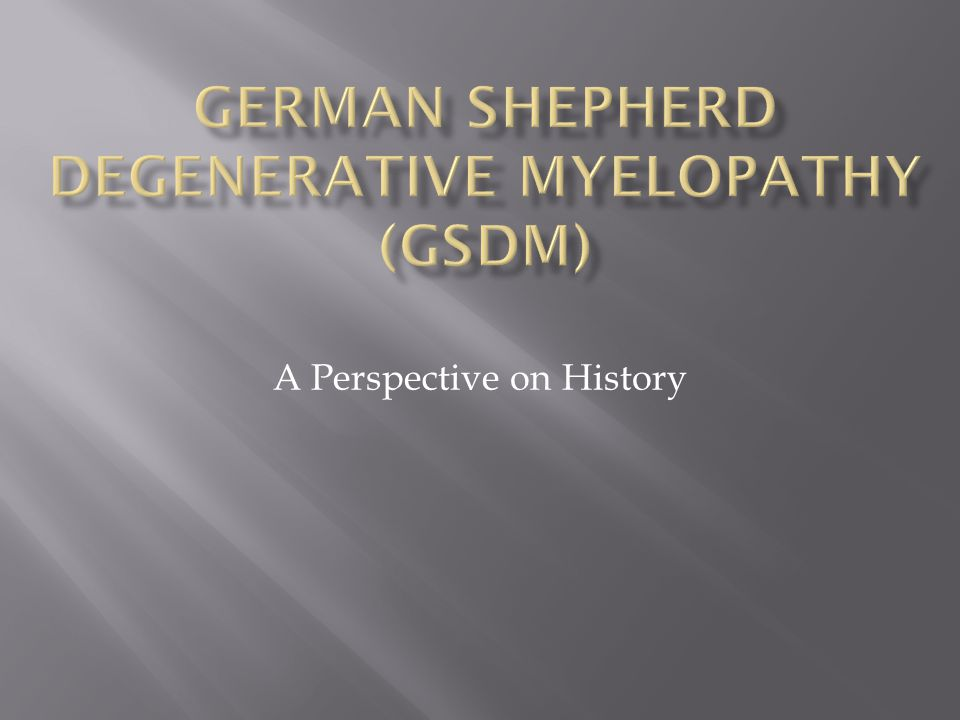 German Shepherd Degenerative Myelopathy (GSDM)